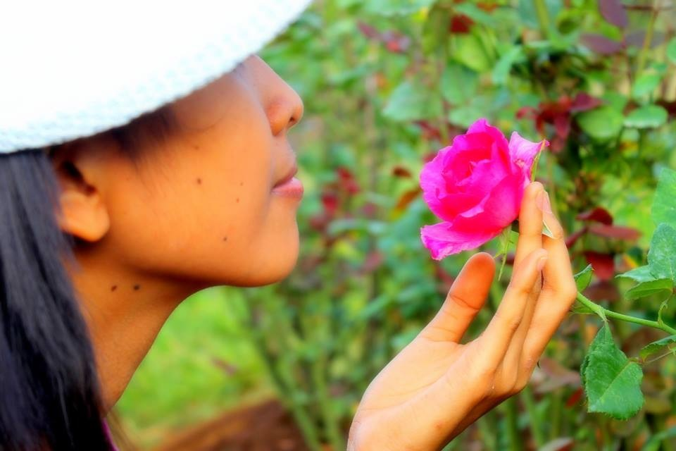 Lilingayon Rose Farm: Stop and Smell the Roses