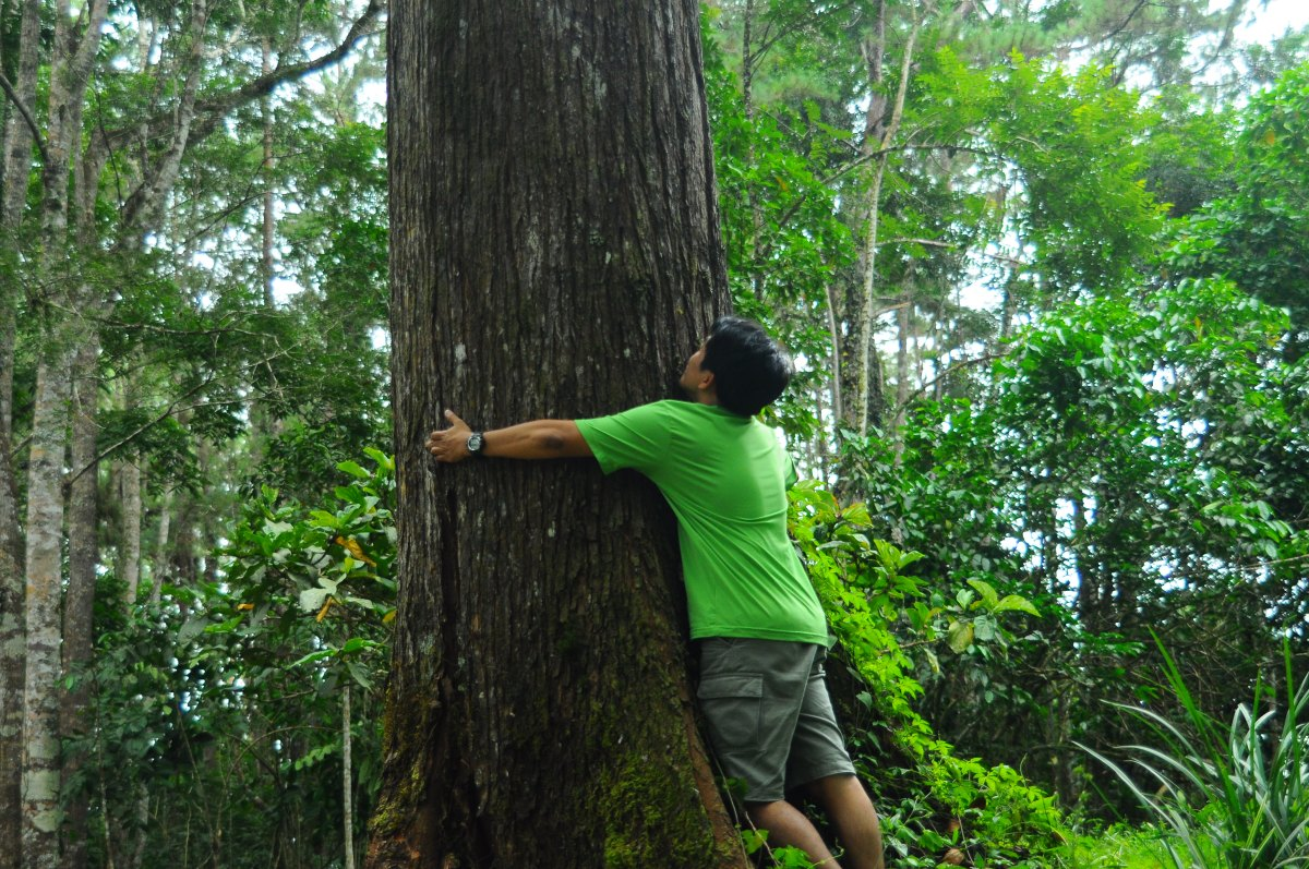 Cinchona Forest Reserve Escapade Part 3: Hug-A-Tree Campaign