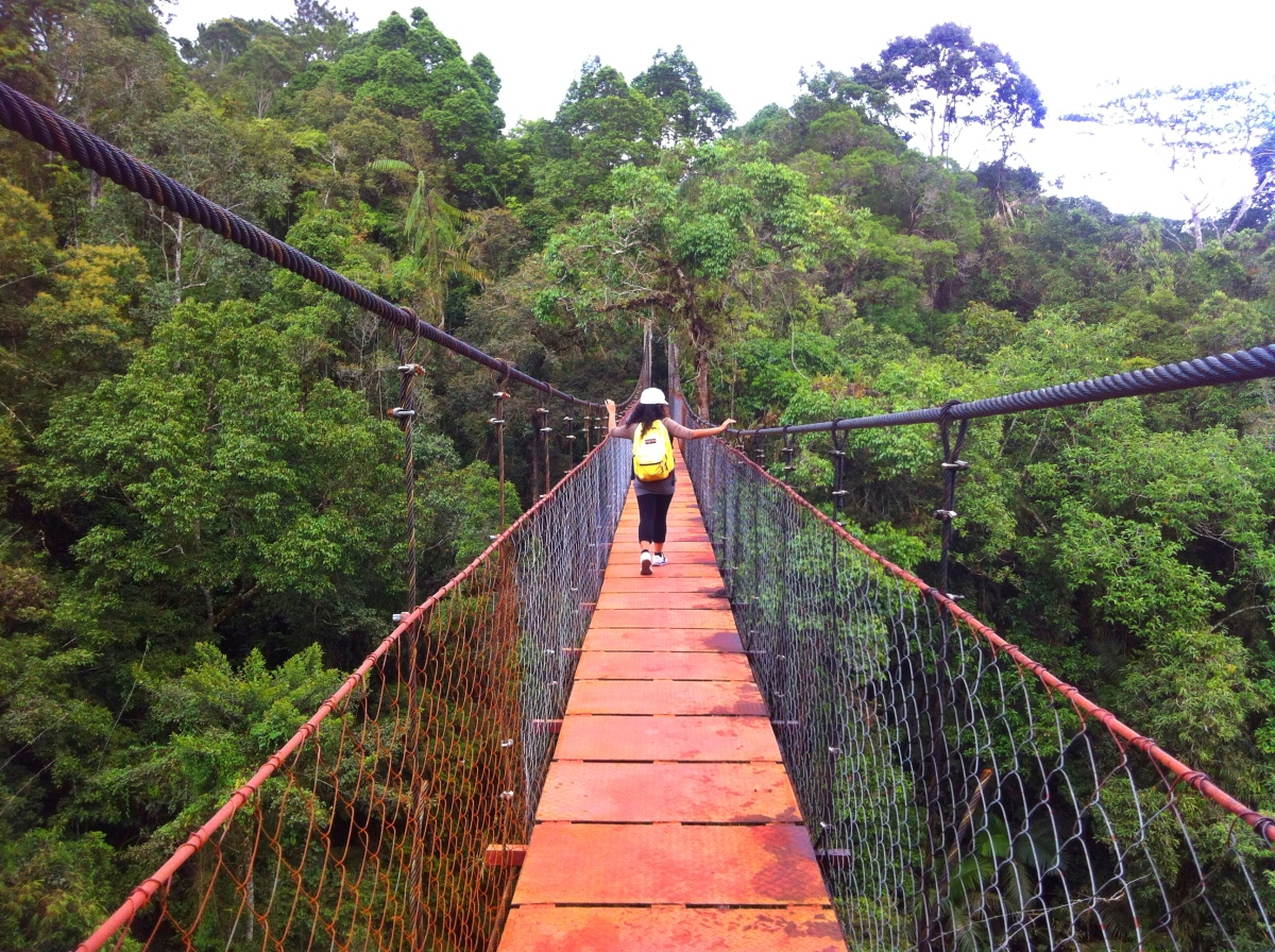 Cinchona Forest ReserveEscapade (Kaatuan, Lantapan, Bukidnon) Part1