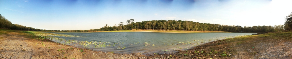 Lake Pinamaloy: Lessons from the WaterLilies